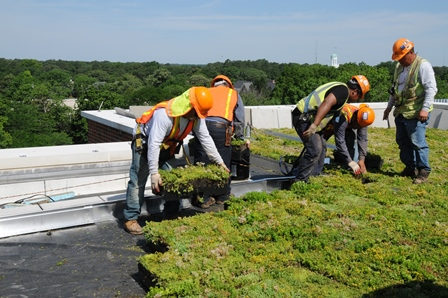 Patricia R. Guerrieri Academic Commons Green Roof