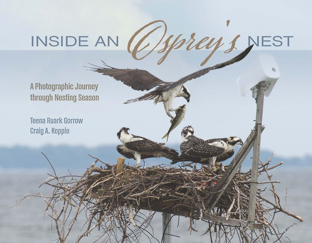 Inside an Osprey's Nest